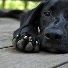 Dog Days by cebrfa