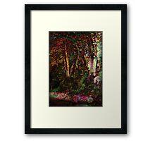 Forest.Sunlight. Framed Print