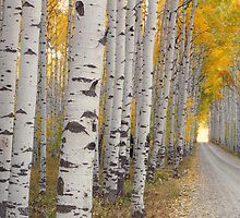 Aspen Alley by AspenStory