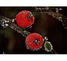 Berries on Ice Photographic Print