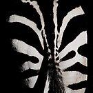 striped by minnow
