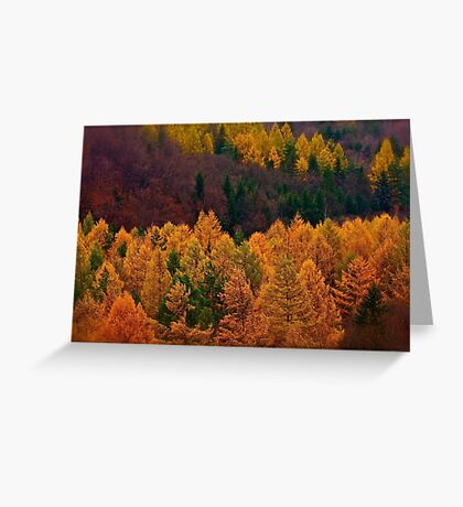 Wonder's of autumn colors  - Poloniae Alpe Besczade . by Brown Sugar - Mr.Medicine . F** Favs  (8) . Views (460) ). Thank you a bunch friends !    Greeting Card