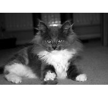 Cute Kitten Photographic Print