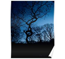 Woods at Dusk II Poster