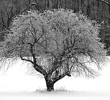 Frosted Apple Tree by Geno Rugh