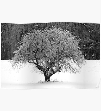 Frosted Apple Tree Poster