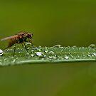 Dew Drop Inn by Bill Maynard