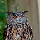 Owl - Parc Omega - August 2010 by Josef Pittner