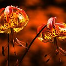 Flowers in Fire by Shienna