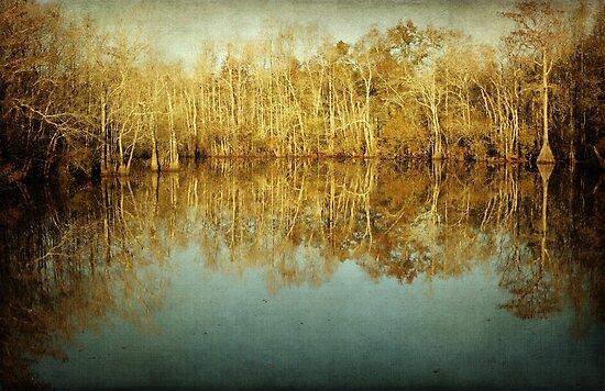 River Cypress by Jonicool