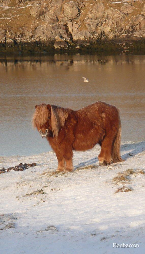 A winter coat by Redbarron