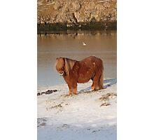 A winter coat Photographic Print