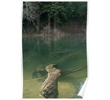 Hidden Forest - Navarro River Poster