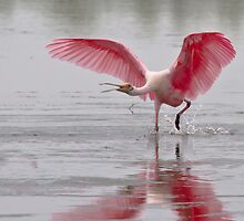 Angry Spoonbill by noffi