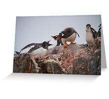 Gentoo penguin disagreement - Antarctica Greeting Card