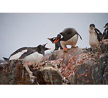 Gentoo penguin disagreement - Antarctica Photographic Print