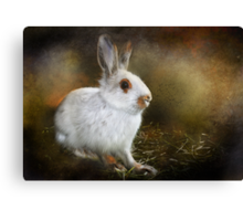 Woolie the Snowshoe Hare Canvas Print