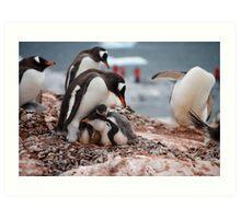 Gentoo penguin chicks sheltering - Antarctica Art Print