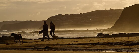 Curious Dog - Bar Beach by Daniel Hardinge