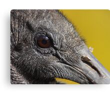 A Face Only a Vulture Could Love Canvas Print