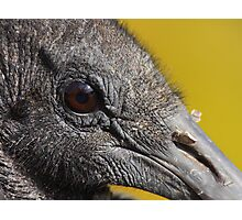 A Face Only a Vulture Could Love Photographic Print