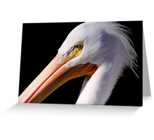 White Pelican Portrait Greeting Card