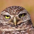 Burrowing Owl Portrait by naturalnomad