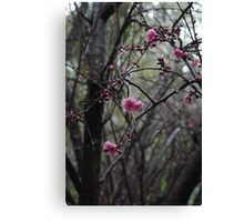 Blossoms bloom in spring Canvas Print