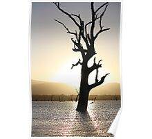 Lake Fyans - Tree Silhouette  Poster