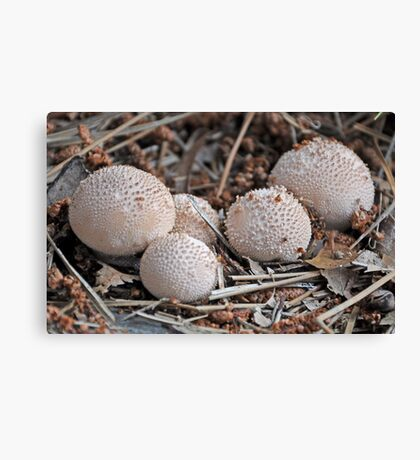 Puff The Daddy Puffball Canvas Print