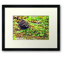 a touch of chocolat Framed Print