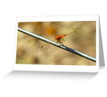 Balanced on a wire Greeting Card