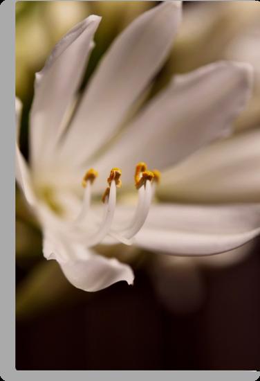 fleur 2 by Karen E Camilleri