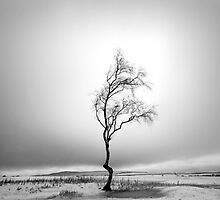 Lone Tree in Snow by Dave  Miller