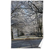 Trees surrounding a path in winter Poster