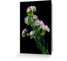 Beautiful carnations Greeting Card