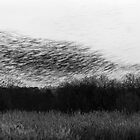 Abstract Starlings by kernuak