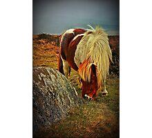 Pony on Dartmoor, Devon, UK Photographic Print