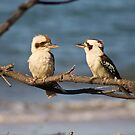 Kookaburra Love  by Margaret Stanton