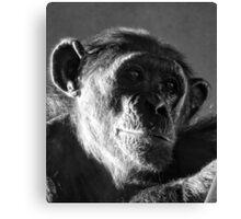 Chimp Portrait Canvas Print