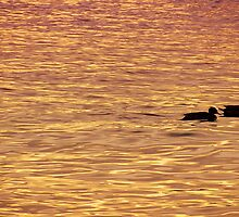 Sentados frente al lago by Constanza Caiceo
