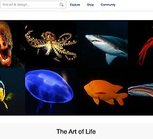 Out Of The Deep - 12 January 2011 by The RedBubble Homepage
