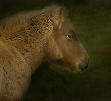 Foal by Catherine Hamilton-Veal  ©
