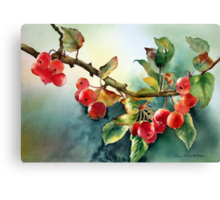 Crab apples after rain Canvas Print