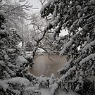 Winter pond by perfectdaypro
