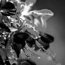 Fushia in Rain by John Schneider