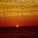 The Birds by perfectdaypro