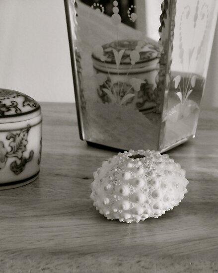 shell,wood,vase,jar by White Owl