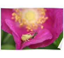 Crab Spider Lunch Poster
