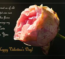 Yet ever new... Valentine's day - card by steppeland